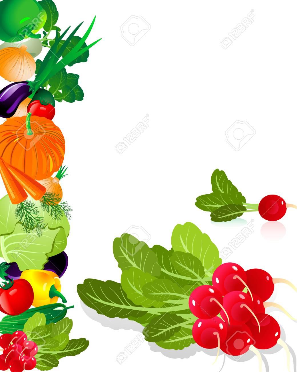 vegetables radish Stock Vector - 6514028