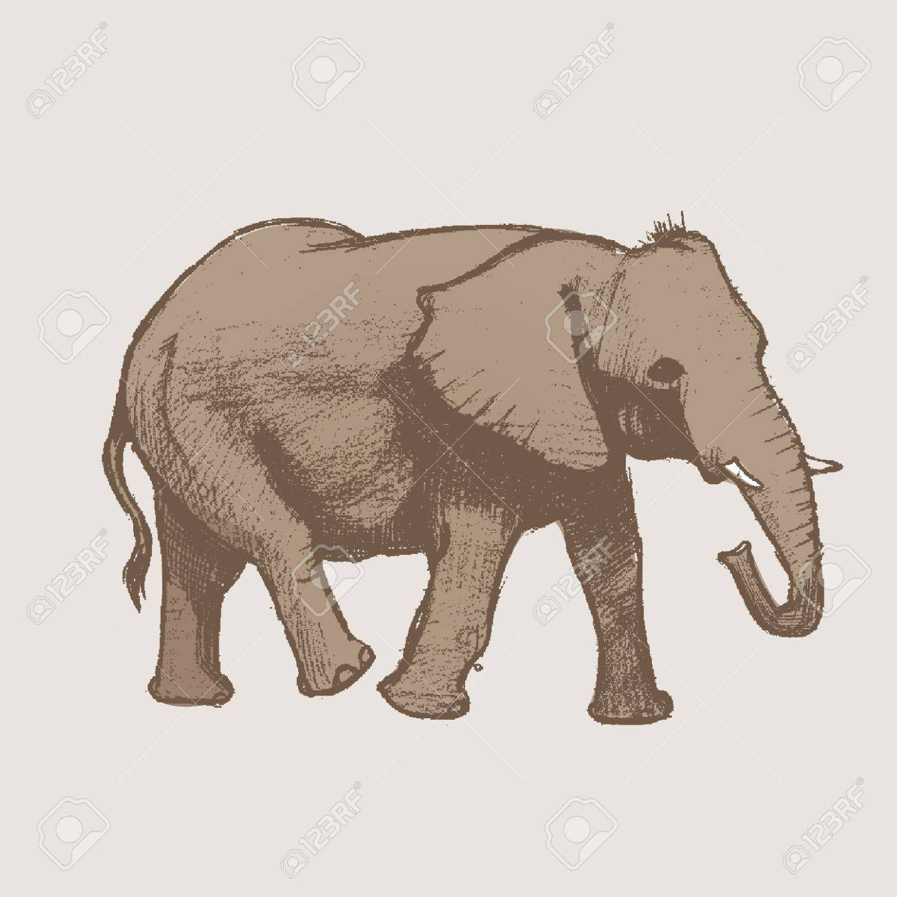 Elephant Art drawing Stock Vector - 14825906