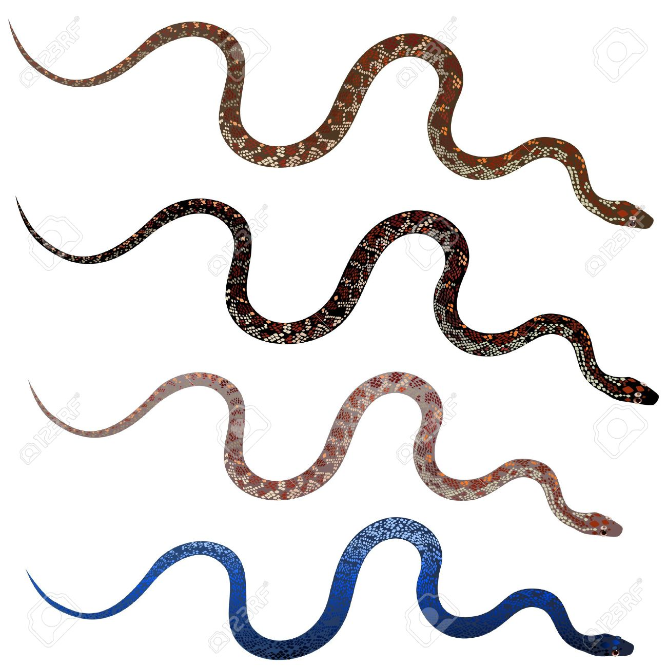 Set pretty realistic snakes Stock Vector - 15442312