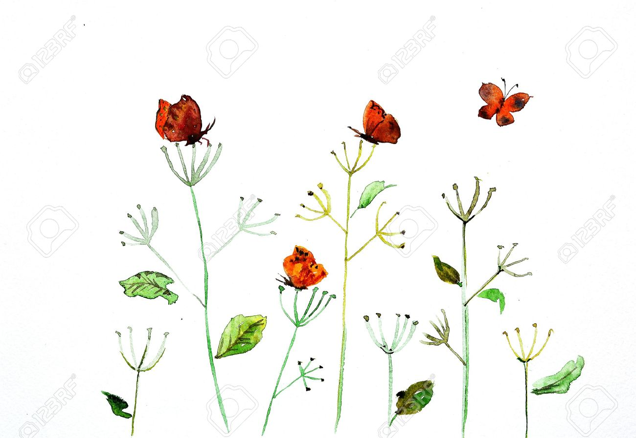 watercolor drawing of a flower with a butterfly Stock Photo - 20559703