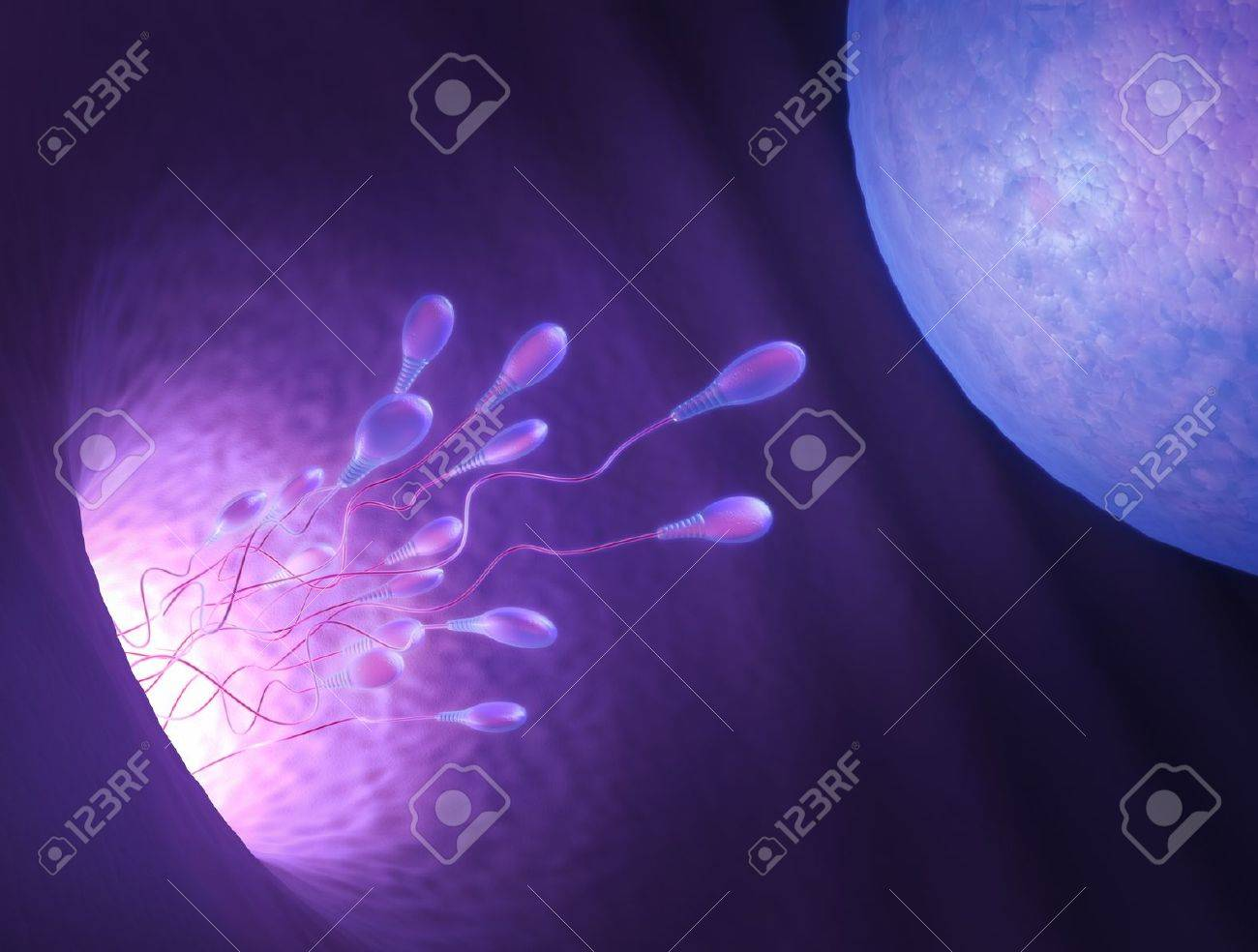 Stylized illustration of various sperm going to meet the egg in the process of human fertilization. - 10529429