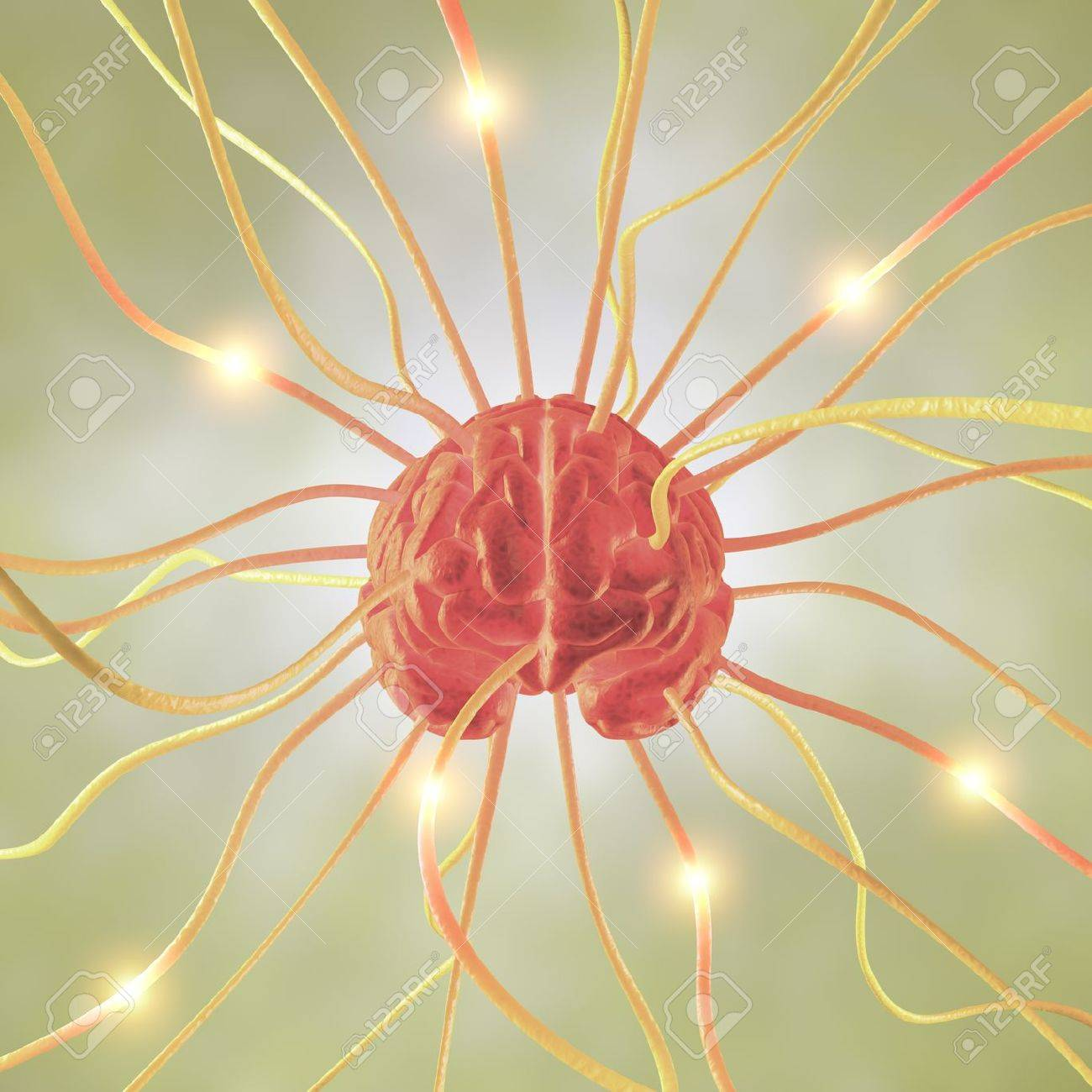 Ramifications brain, concept of the human brain system. Stock Photo - 10803478