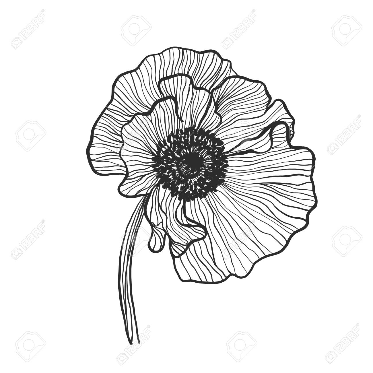 Poppy Flower Black And White On A White Background Vector Royalty