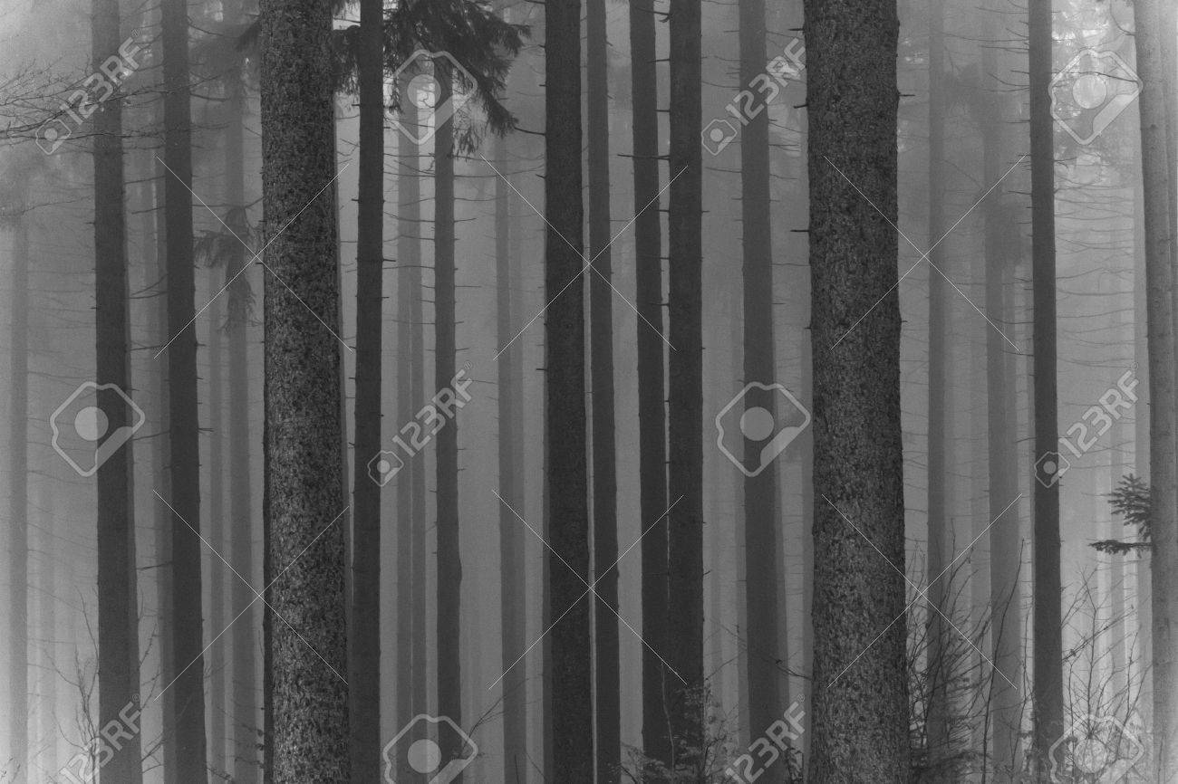 misty forest at dawn in the autumn Stock Photo - 8350168