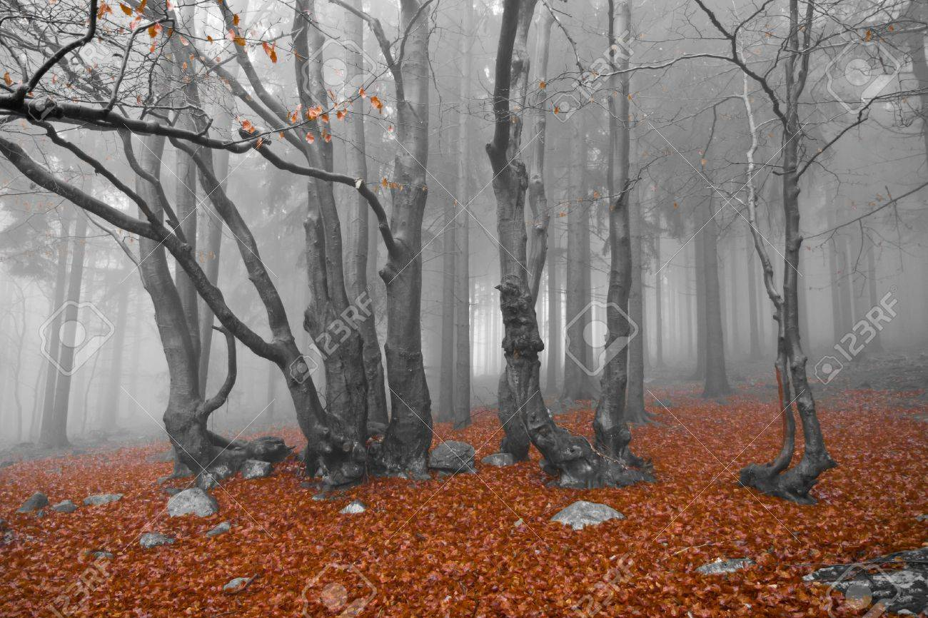 misty forest at dawn in the autumn Stock Photo - 8552622