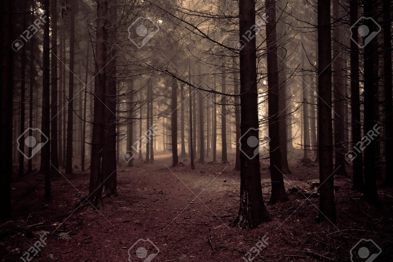Forest at Dawn Misty Forest at Dawn in The