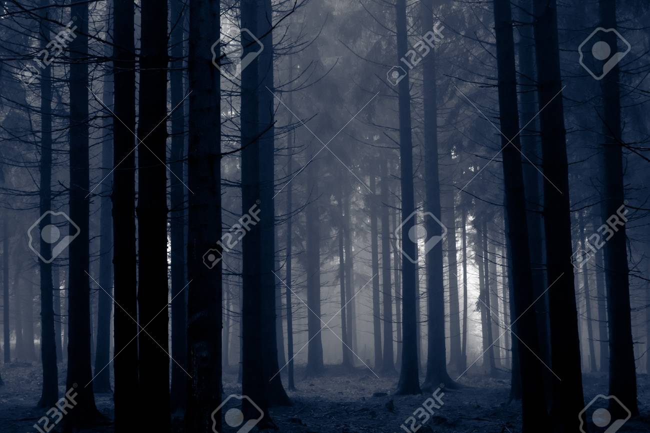 misty forest at dawn in the autumn Stock Photo - 9062613