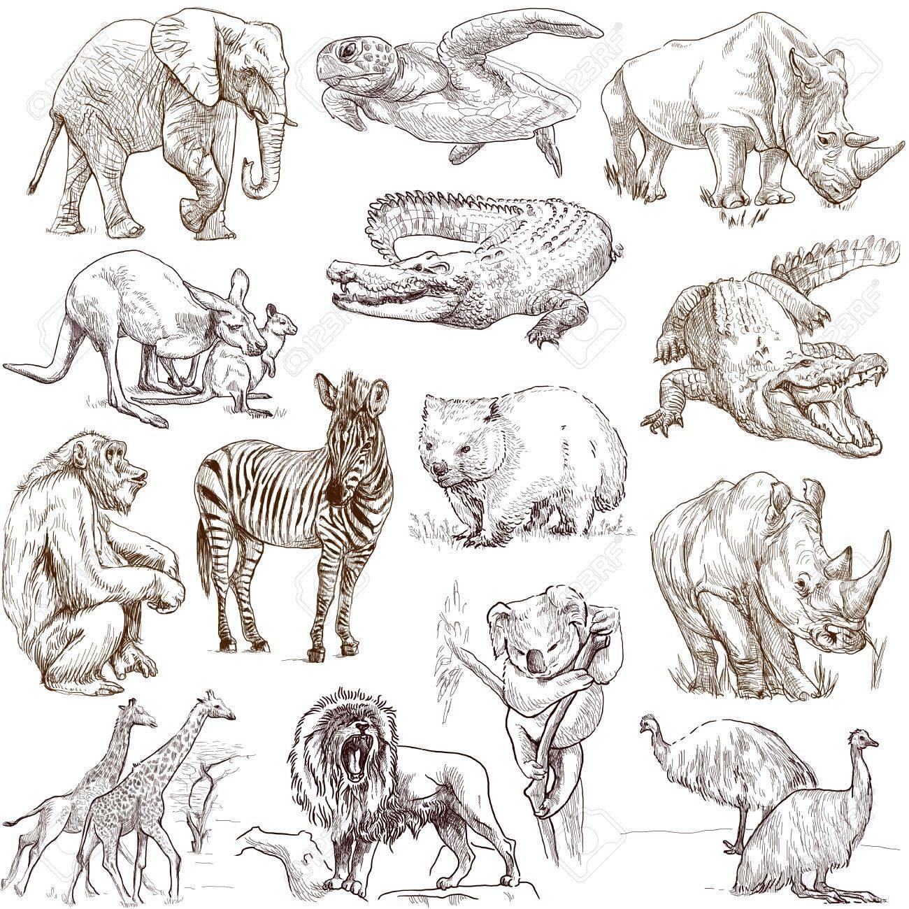 コレクションの世界の周りに動物は 1、白 - 手描きイラスト集