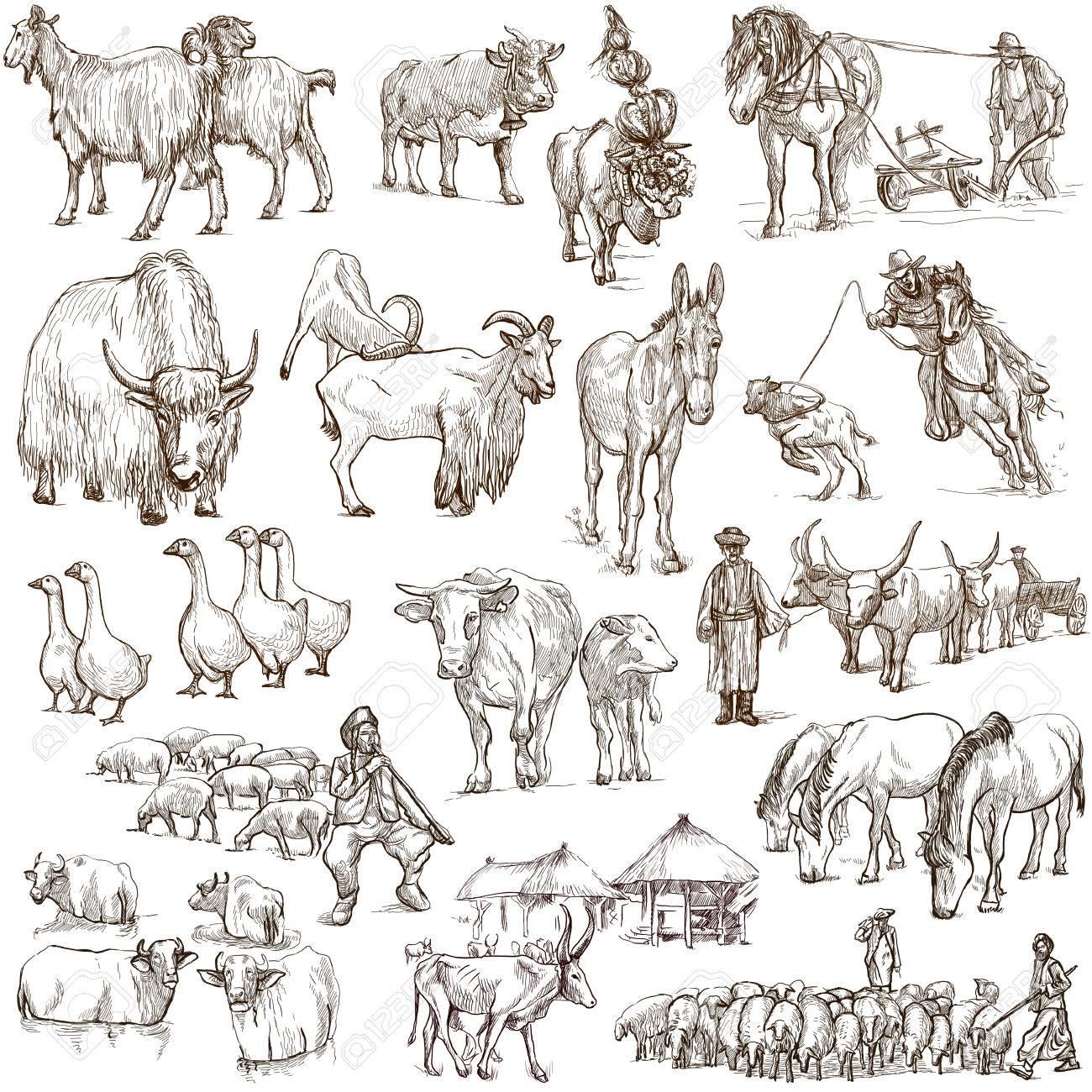 世界の動物 (セット no.12 - 農場の動物) - 手描きイラスト集。説明