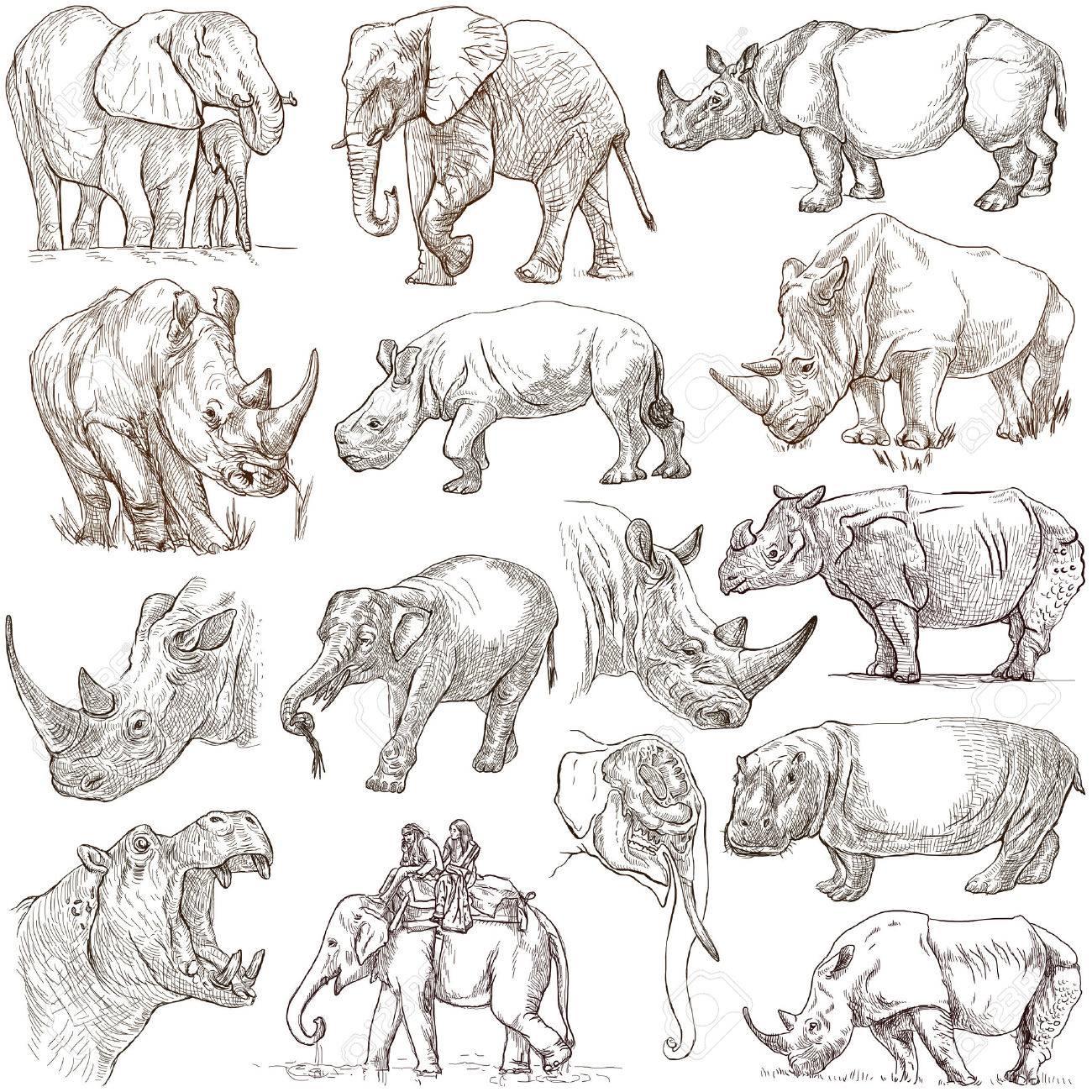 重い動物 (象、カバ、サイ) - 手描きイラスト集です。説明 - フルサイズ