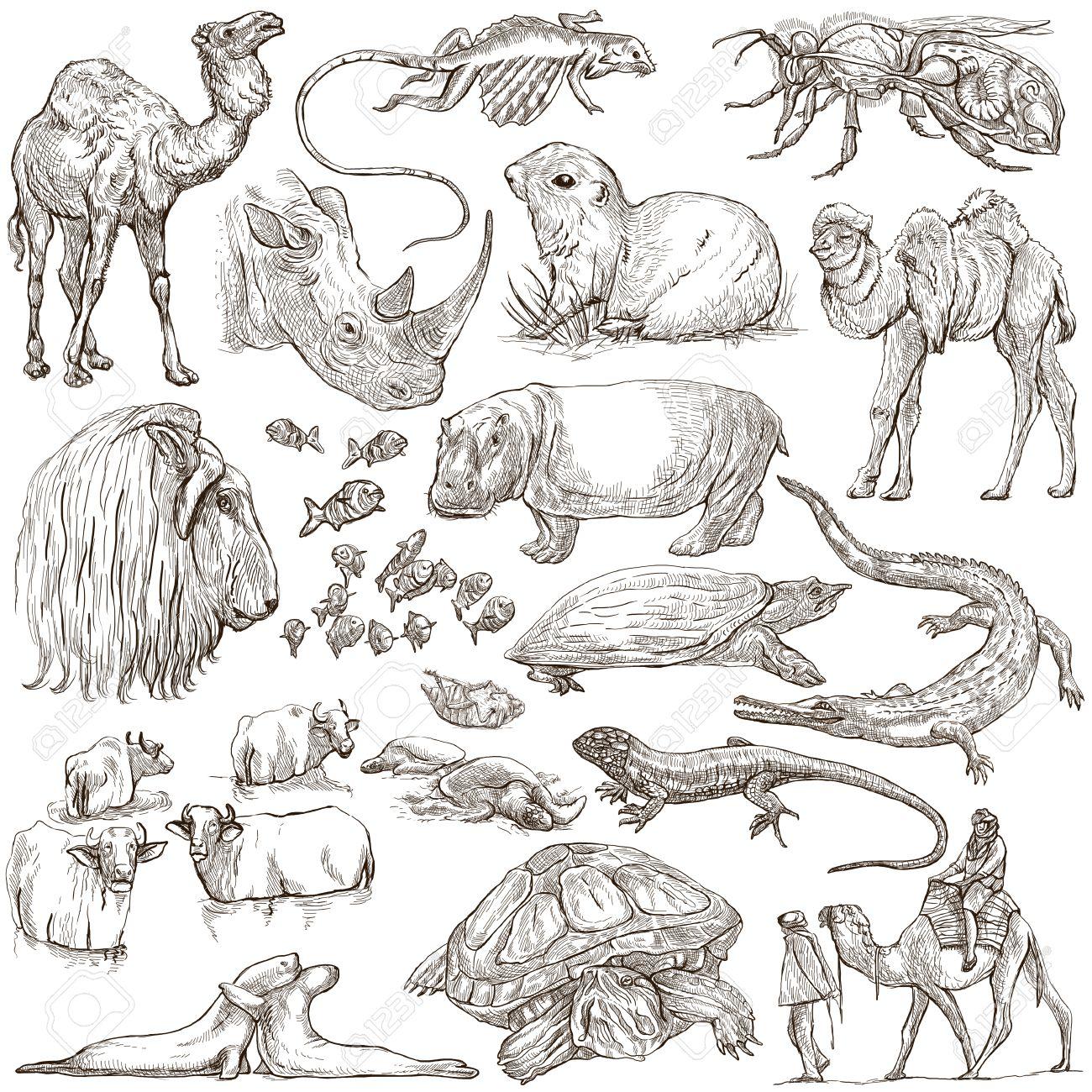 世界の動物。手描きイラスト集です。フリーハンド スケッチ、線画。フル