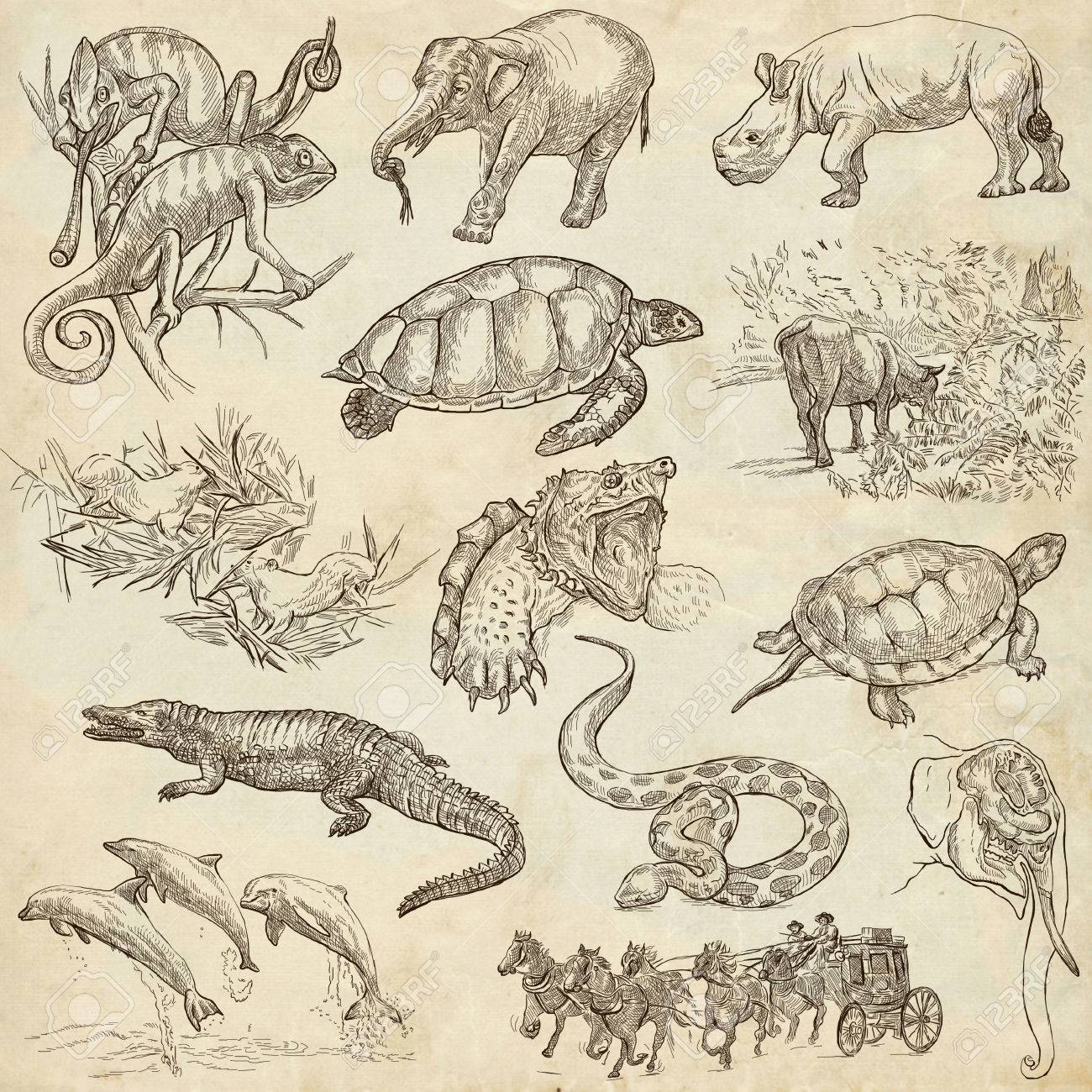 世界の手描きイラスト集動物説明コントロール フルサイズの手描き