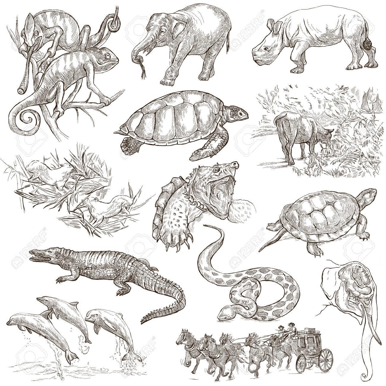 世界の手描きイラスト集動物。説明/コントロール: フルサイズの手描き