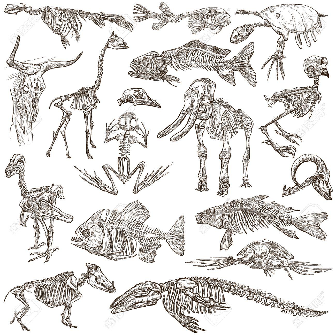 手描きイラストのコレクションの異なる動物の頭蓋骨と骨。フルサイズの