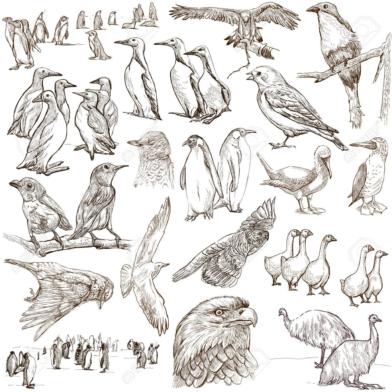 From series animals around the world birds collection of an hand drawn illustrations