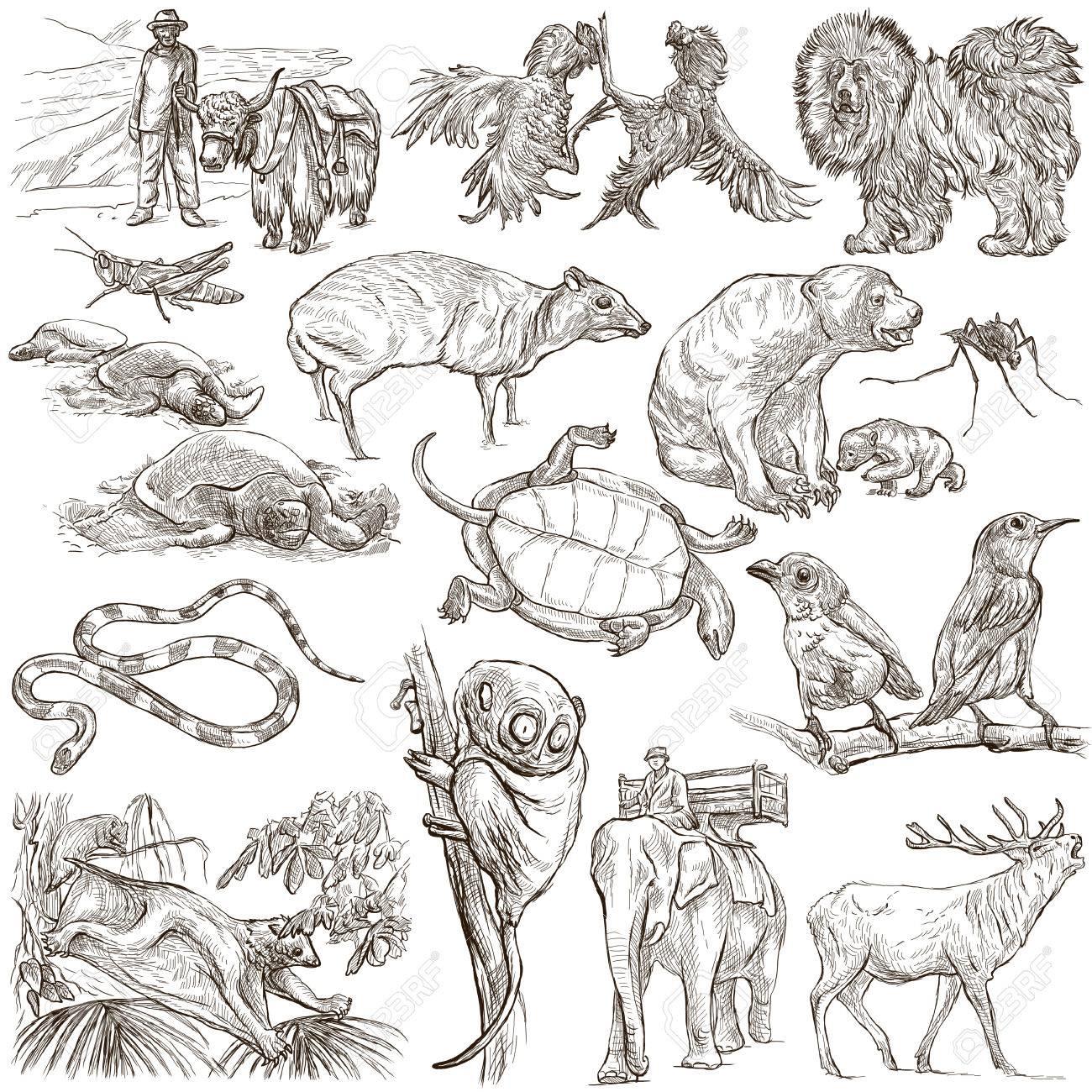 手描きイラストの世界 - パック、コレクション - コレクションの周りに