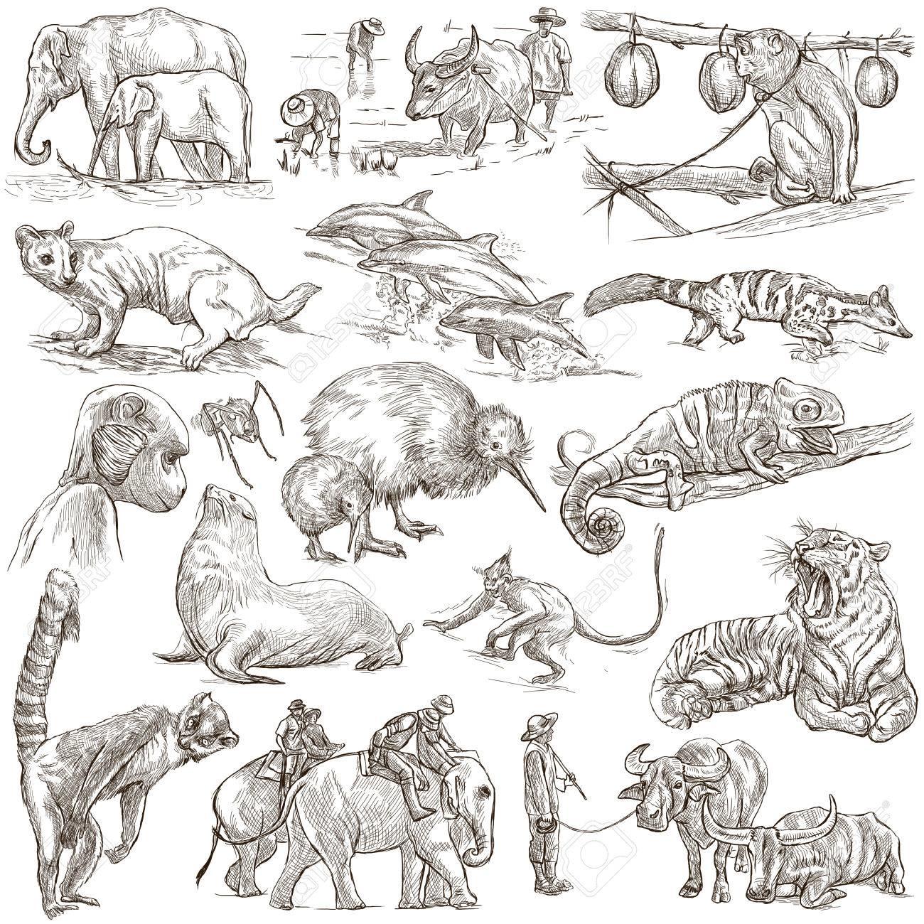 世界の動物手書きフルサイズのイラストライン アート画像の