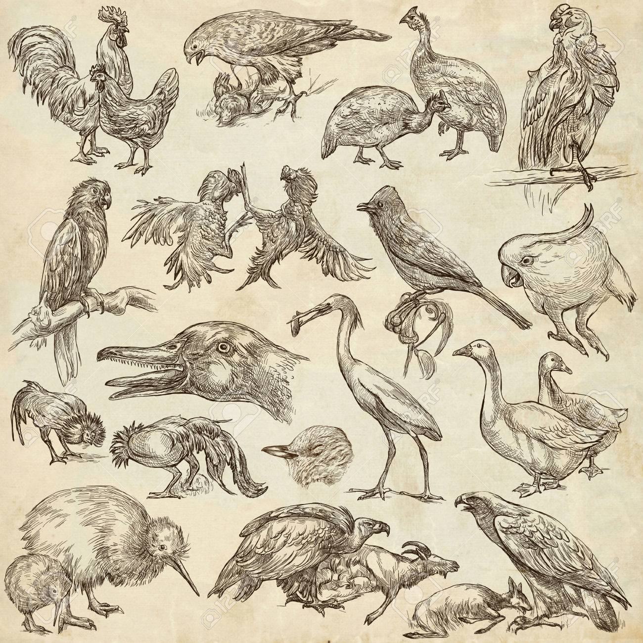 Animals birds around the world collection of an hand drawn illustrations freehand