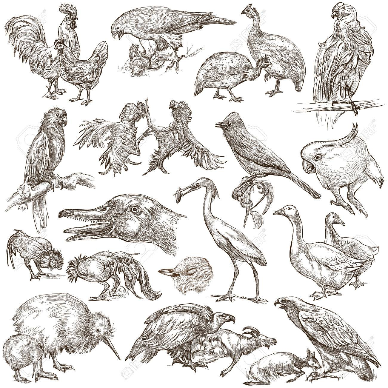 Sketches Of Animals And Birds