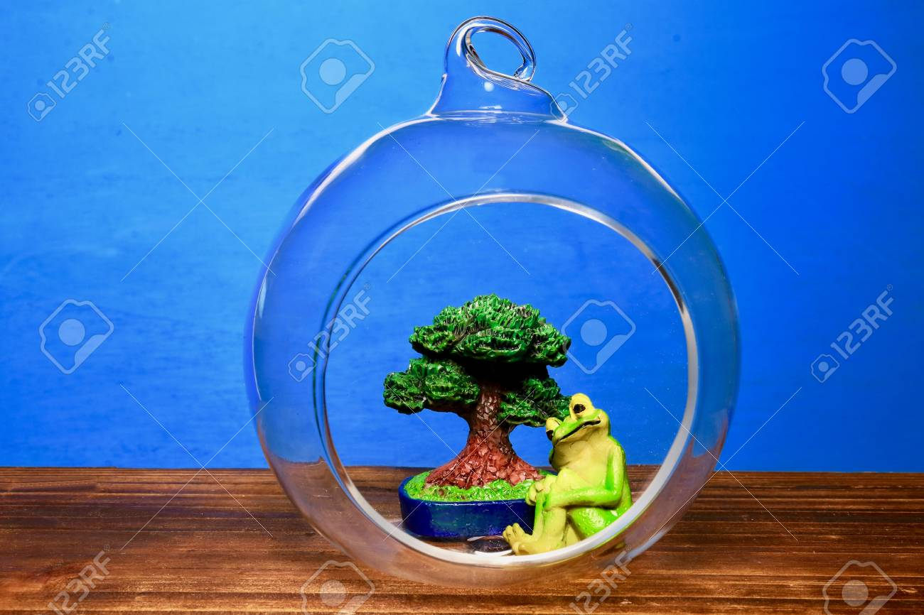 Terrarium Of Bonsai And Frog Stock Photo Picture And Royalty Free Image Image 98305037