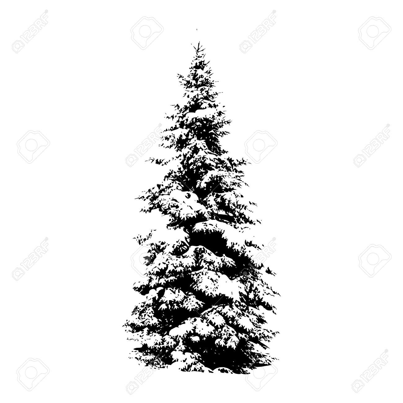 Pine Tree Vector Illustration For Your Design Royalty Free Cliparts
