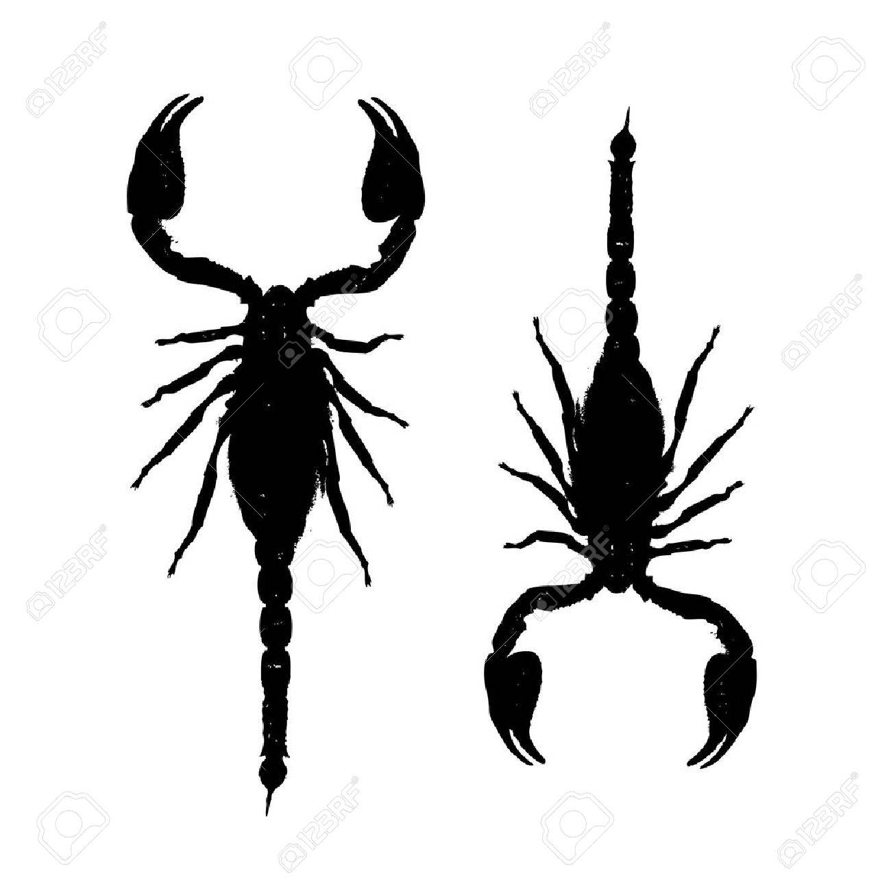 Scorpions, black silhouette for your design Stock Vector - 22842534