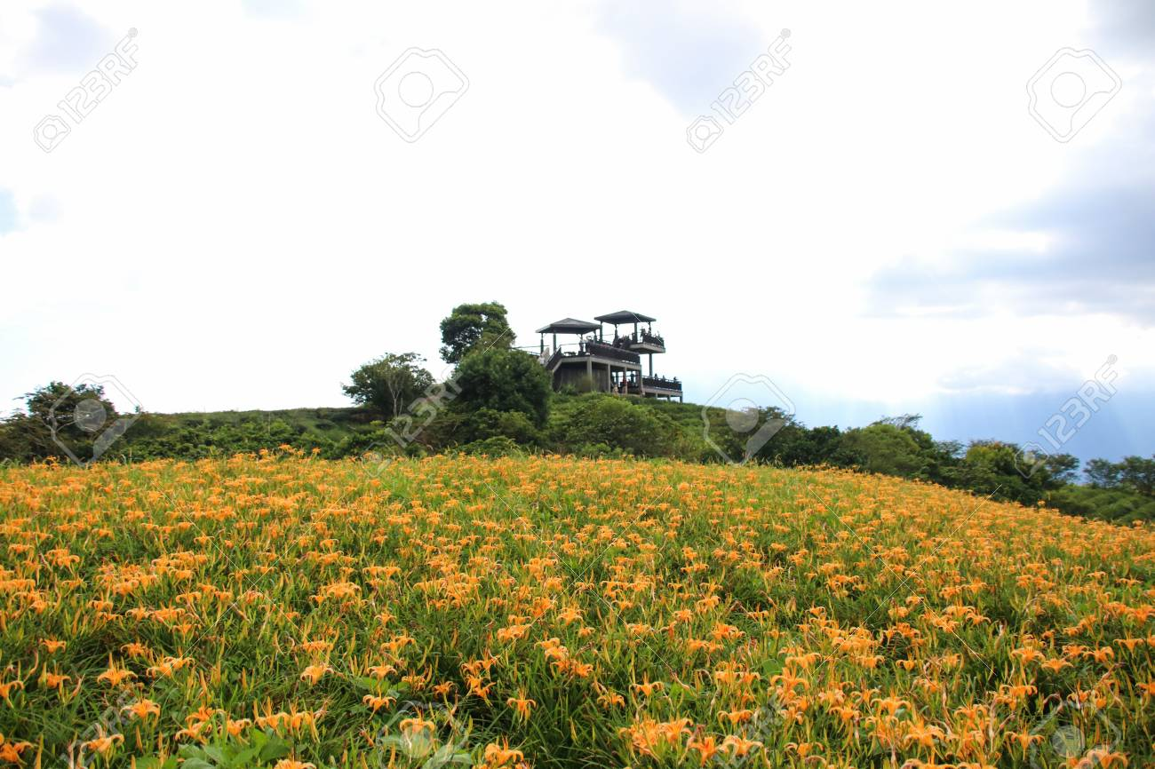 Taiwan hualien beautiful scenery of daylily flowers with village stock photo taiwan hualien beautiful scenery of daylily flowers with village and mountains in a sunny day izmirmasajfo