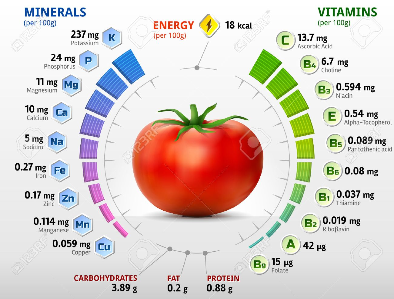 Vitamins and minerals of tomato  Infographics about nutrients