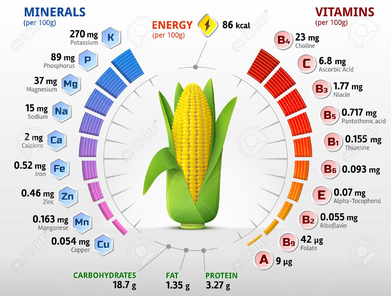 Vitamins and minerals of corn cob infographics about nutrients in imagens vitamins and minerals of corn cob infographics about nutrients in ear of maize qualitative vector illustration about corn vitamins vegetables ccuart Images