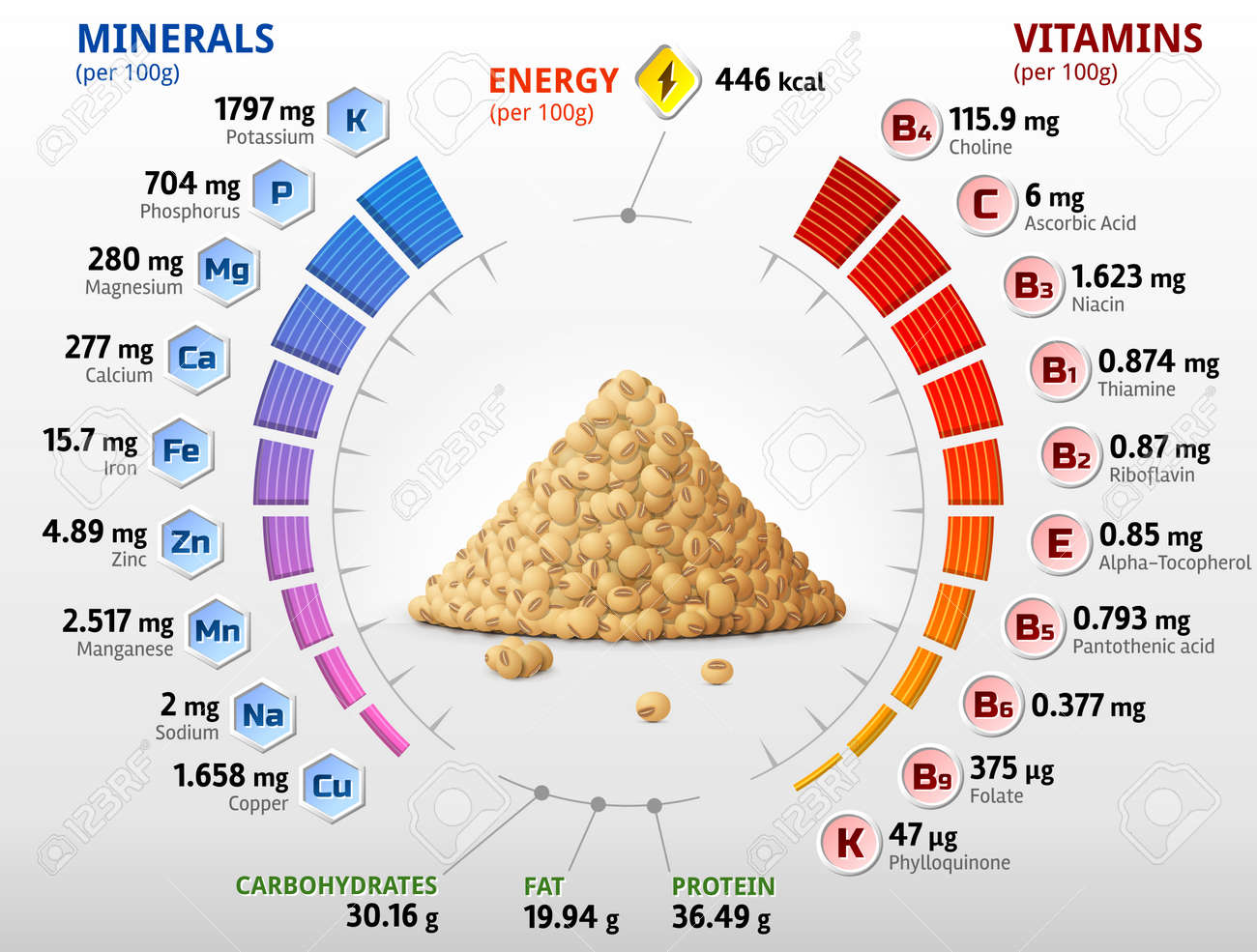 Vitamins and minerals of raw soybeans. Infographics about nutrients in mature soy grain. Vector illustration for soya, health food, agriculture, vitamins, legume, nutrients, diet, etc - 166514706