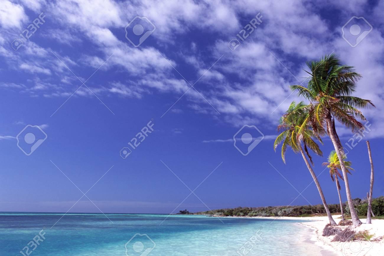 Pulm trees on Caribbean coastwise Stock Photo - 5805659