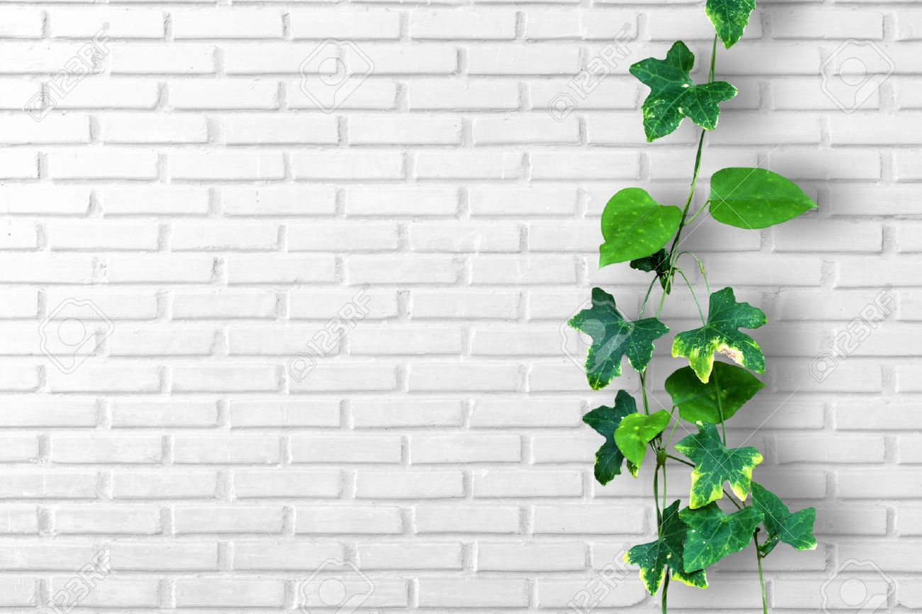Climber Plant With White Brick Wall Background Stock Photo Picture And Royalty Free Image Image 44888174