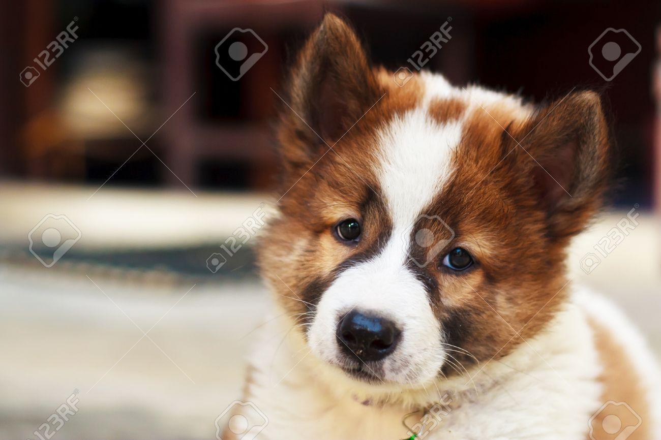 Immagini Stock Il Cane Alla Ricerca Proprietario è Così Carini E