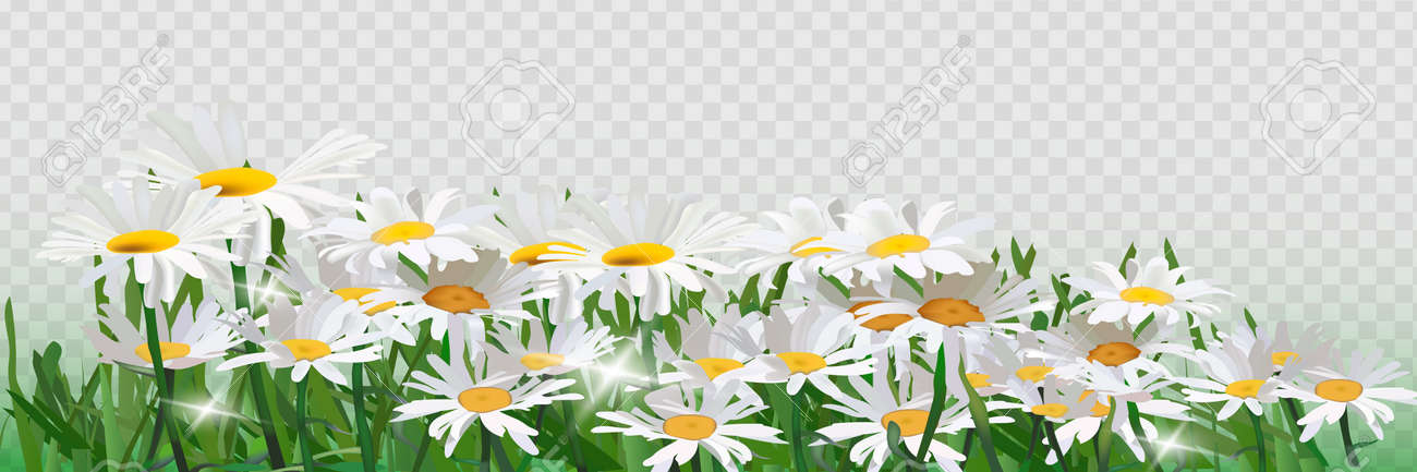 Bouquet realistic daisy, camomile flowers. - 169711907