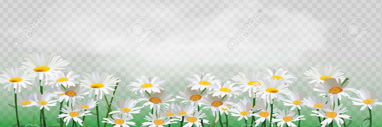 Bouquet realistic daisy, camomile flowers. - 169116574