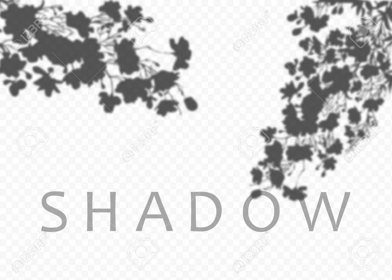 Shadow overlay effect. Transparent soft light and shadows from plant branches, leaves and foliage. Mockup of transparent shadow overlay effect and natural lightning - 169712004