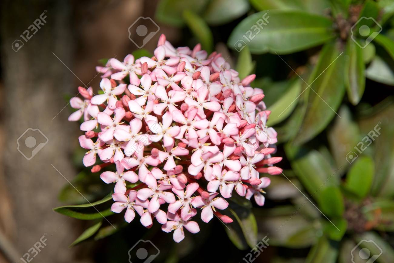 Pink spike flowers stock photo picture and royalty free image pink spike flowers stock photo 71024091 mightylinksfo Image collections
