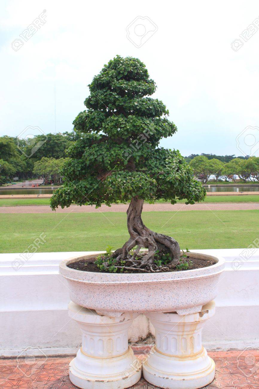 green bonsai tree in gerden Stock Photo - 10051449