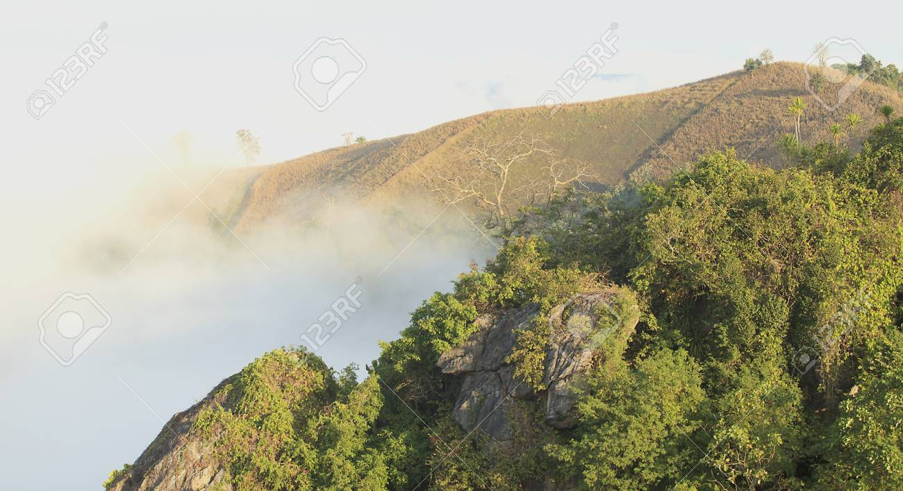 woods and fields covered with fog on a winter morning Stock Photo - 17440002
