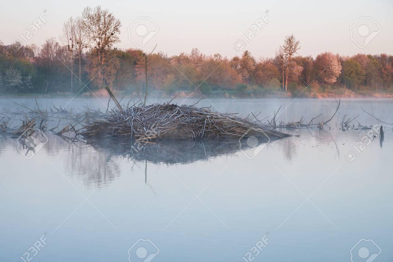morning mood at a lake with a beaver lodge - 57831360