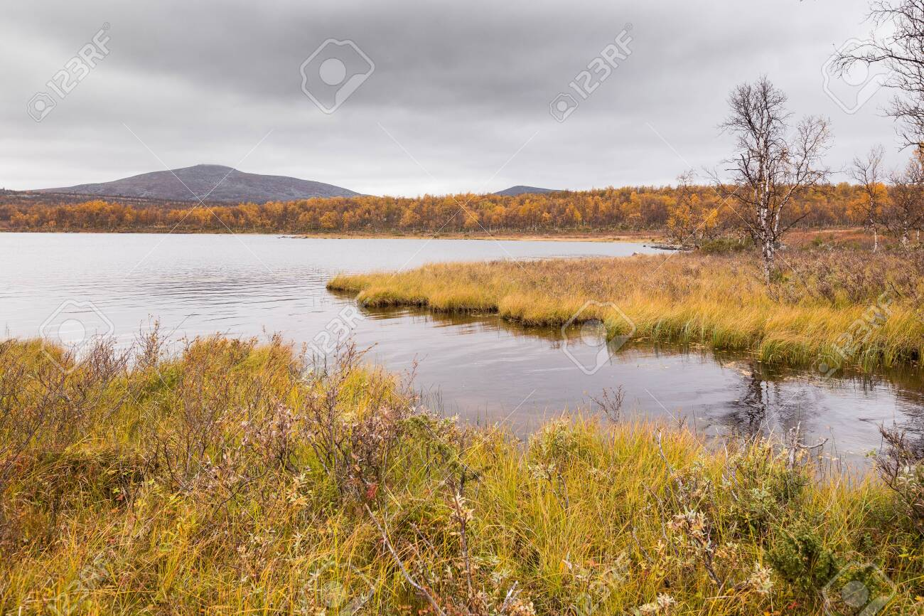 Autumn colors in northern Finland - 133091831