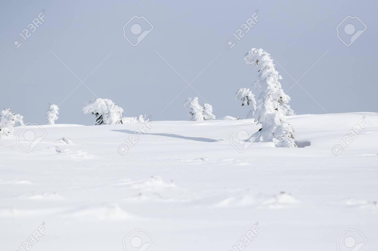 Winter landscape in Krkonose (Poland, Czech Republic) - 133091856