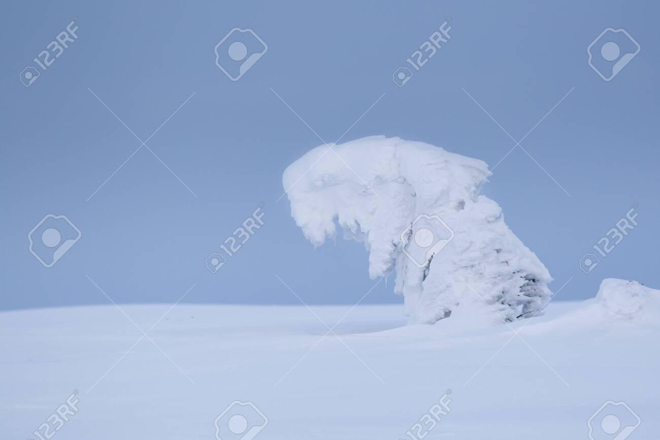 Winter landscape in Krkonose (Poland, Czech Republic) - 133182010