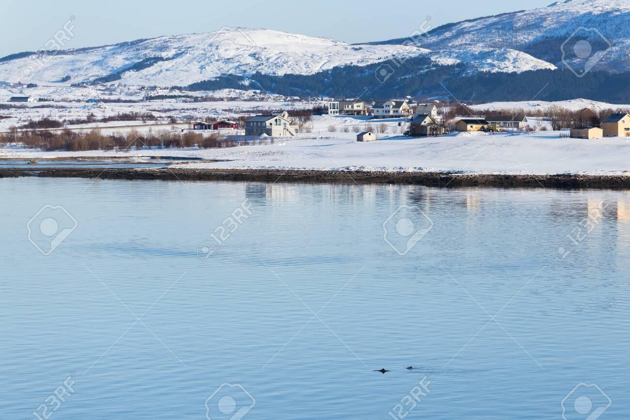Whales near Lofoten islands in winter - 131595712