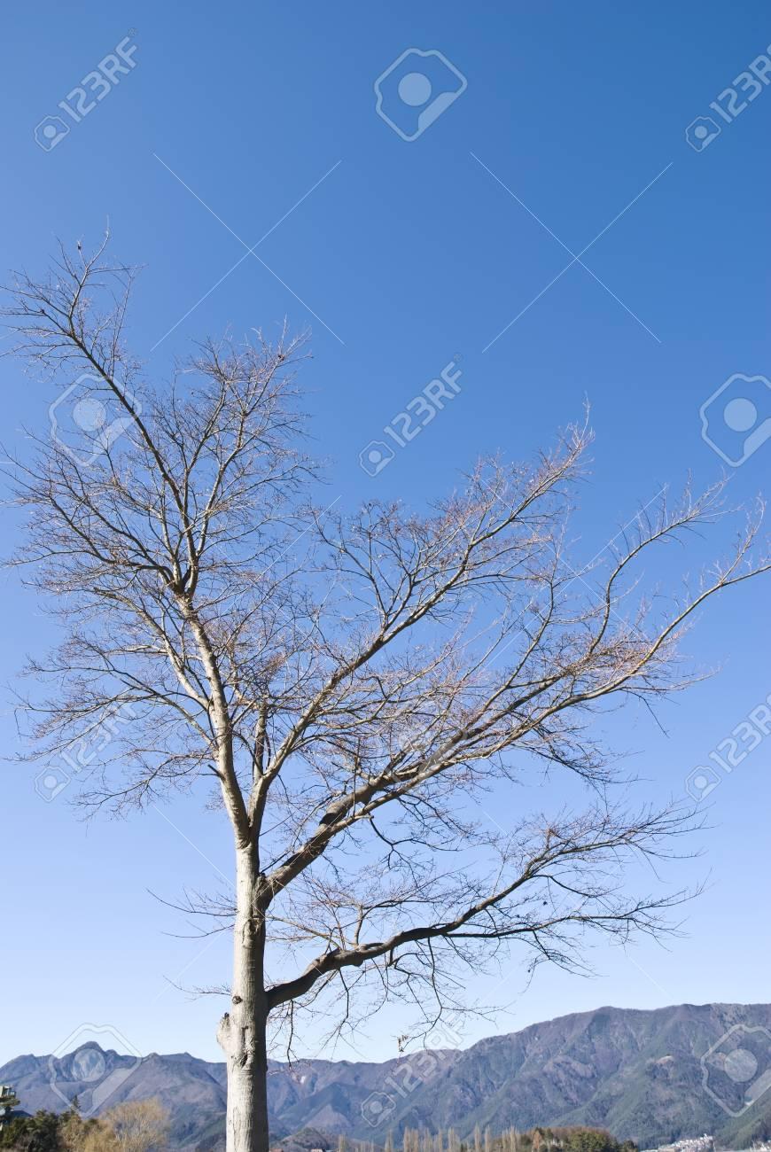 dry tree in blue sky Stock Photo - 8930715