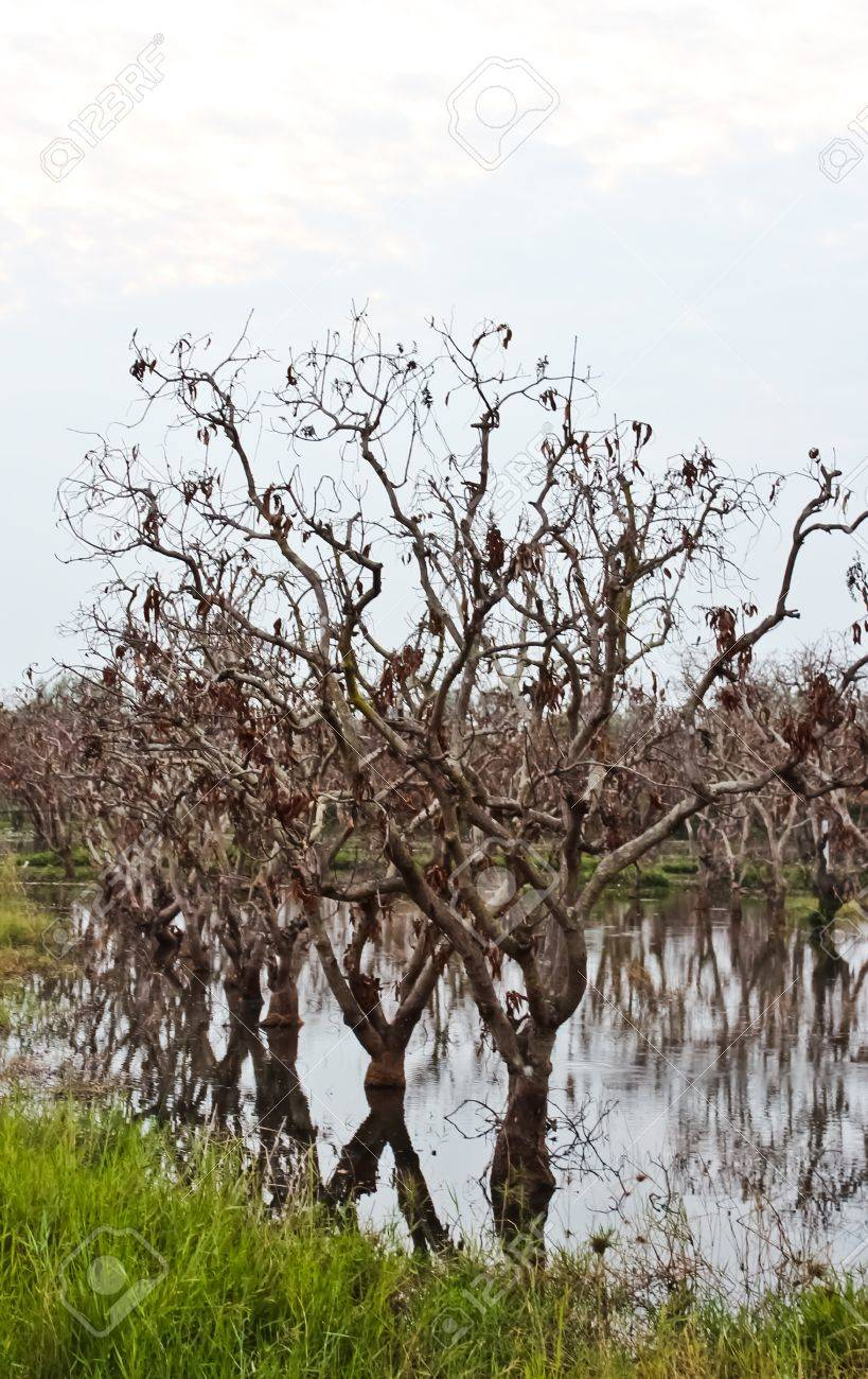 Dead trees and flooding Stock Photo - 12432837