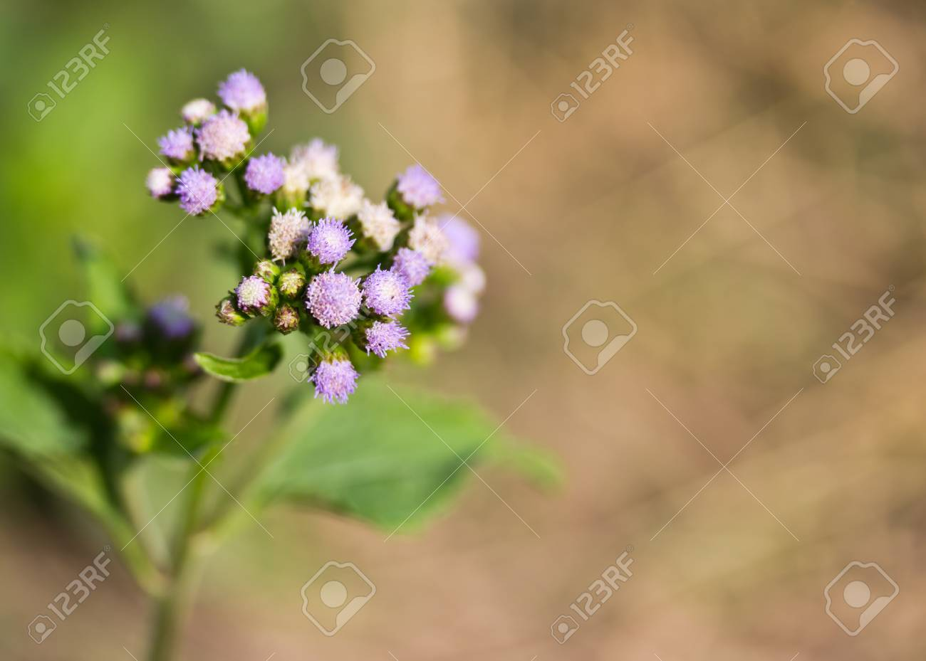 A single green stem with tiny little purple flowers stock photo a single green stem with tiny little purple flowers stock photo 25103938 mightylinksfo