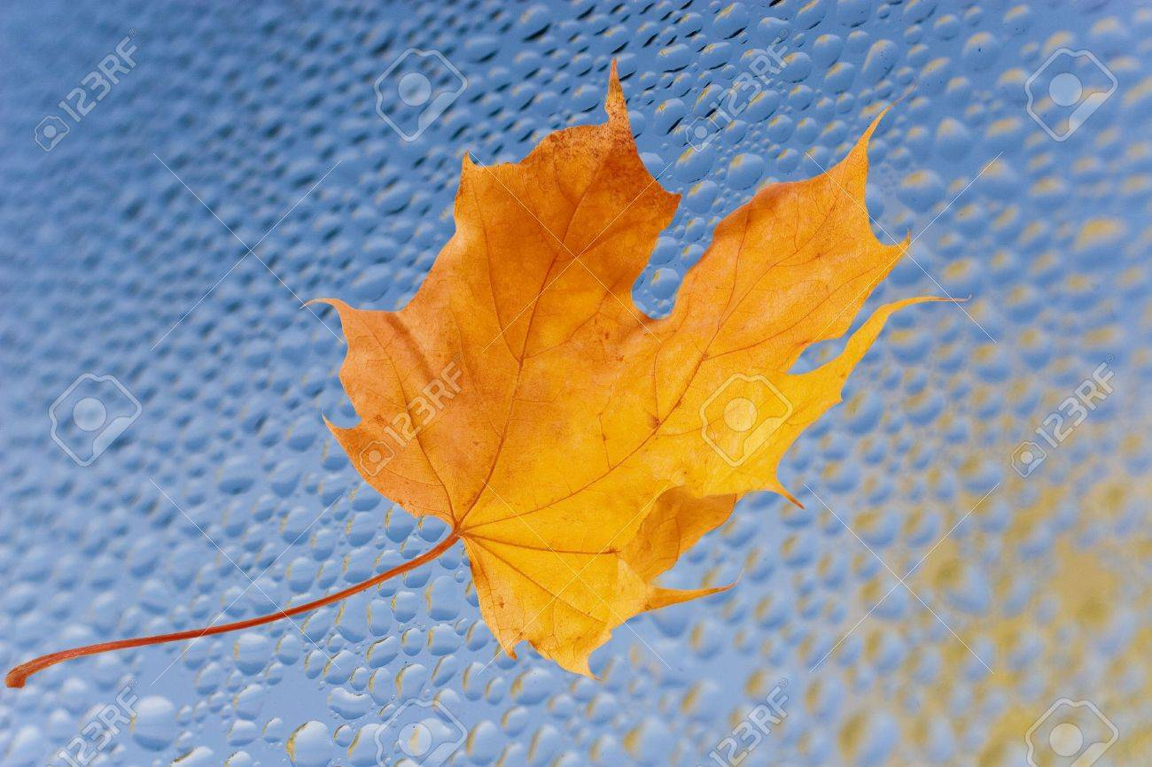 Autumn maple leaf on the blue glass (with reflections of flying yellow autumn leaves in raindrops) Stock Photo - 5645228