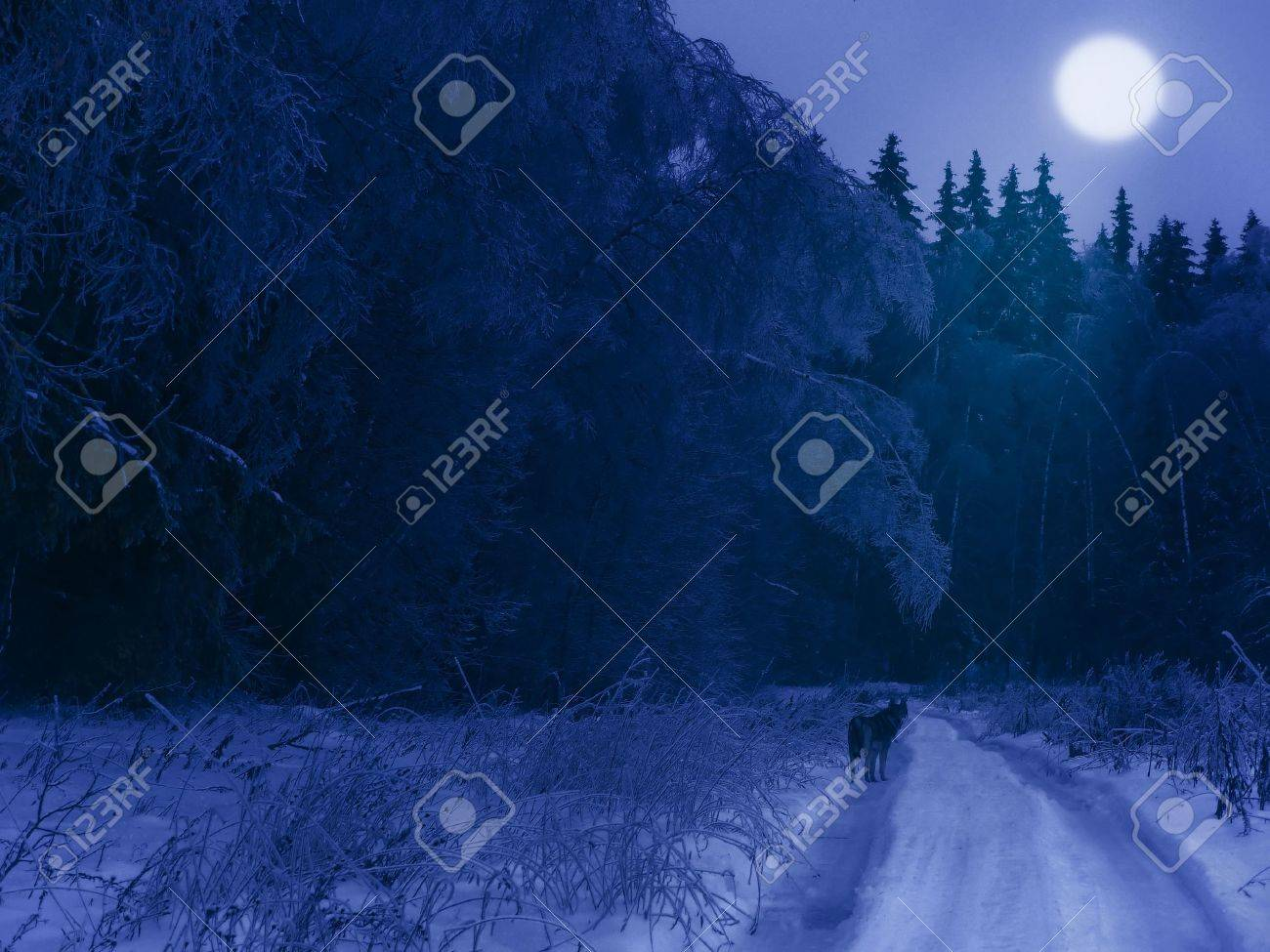Winter night in the forest (with a lonely wolf on the road and moon in the sky) Stock Photo - 9097644