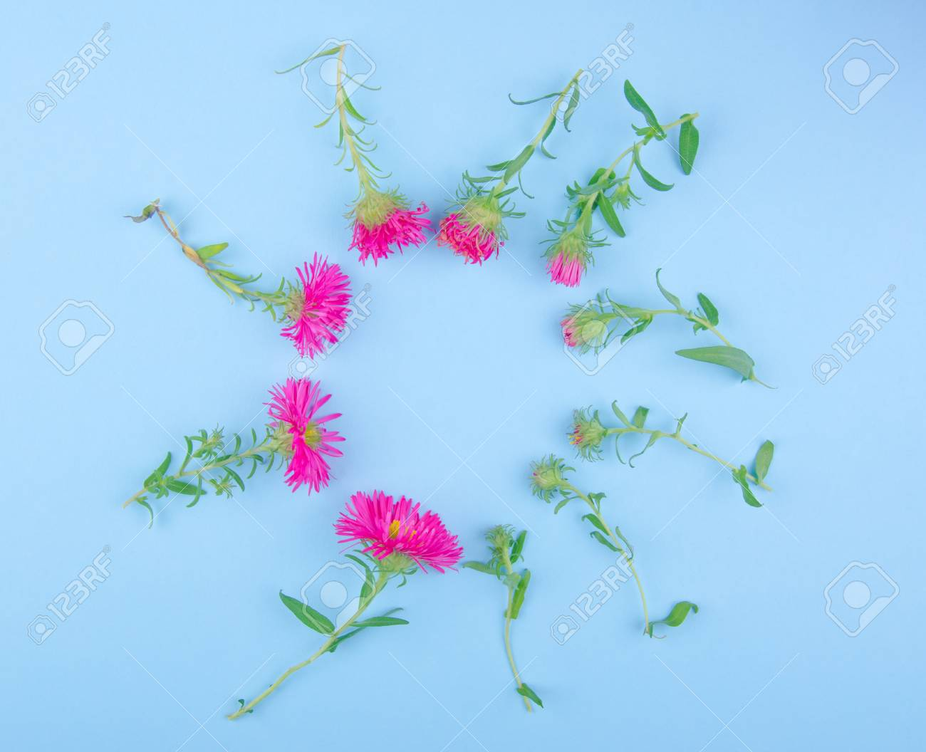 Pink Aster Flowers Scattered Against A Blue Background In The